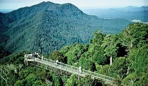 Dorrigo National Park 1